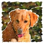 Arwen, a Golden Retriever / Yellow Lab Mix, in Watercolor