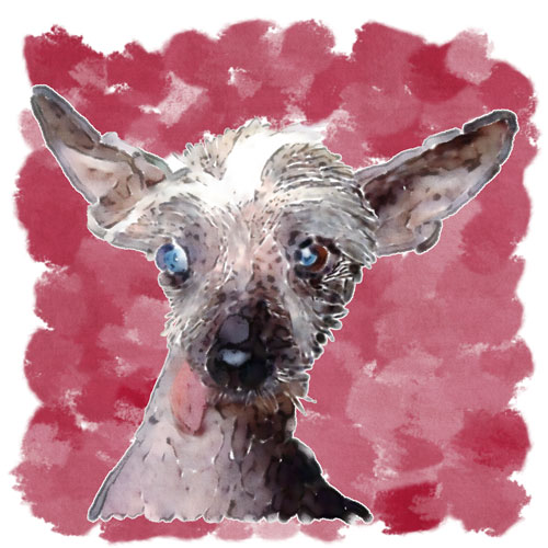 A friend commissioned this piece to commemorate Harry, the recently-passed companion of a good friend.  John worked hard to capture the texture of Harry's skin and wispy hair, which were distinctive features for the Chinese Crested.