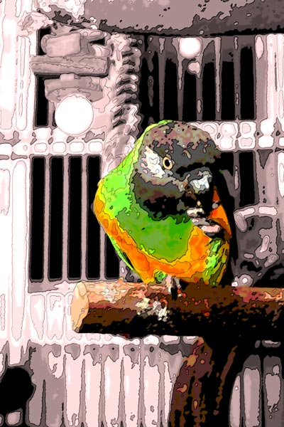 Beth's Senegal Parrot Sam poses while nibbling a treat in this interesting rendering.  John first applied several artistic treatments to reach a pseudo-watercolor rendering, then extracted Sam from the background, which he desaturated to make our little green subject stand out.