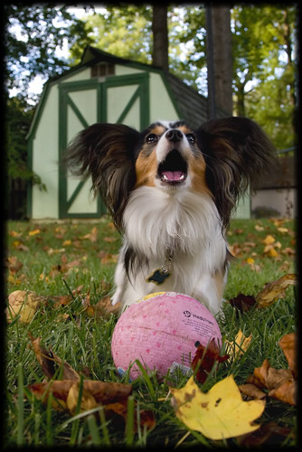 Papillon Gothic -- Didi and Her Ball